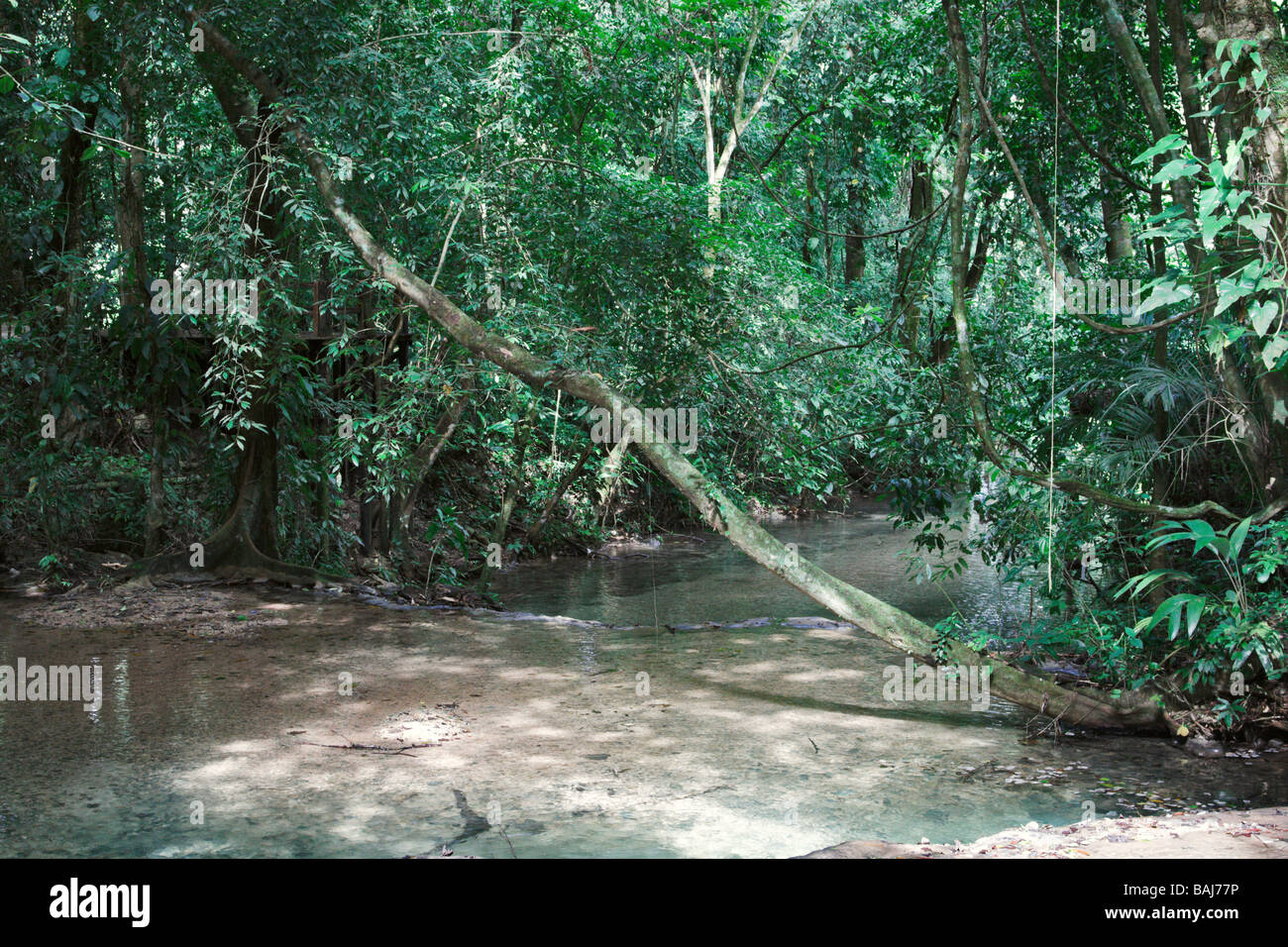 Shallow stream in jungles Palenke Mexico - Stock Image