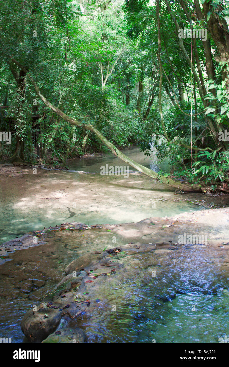Shallow stream in jungles. Palenke, Mexico - Stock Image