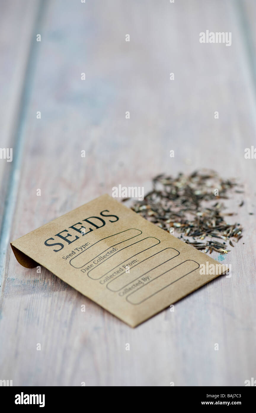 Seed packet for saving flower seeds on a wooden table top. UK - Stock Image