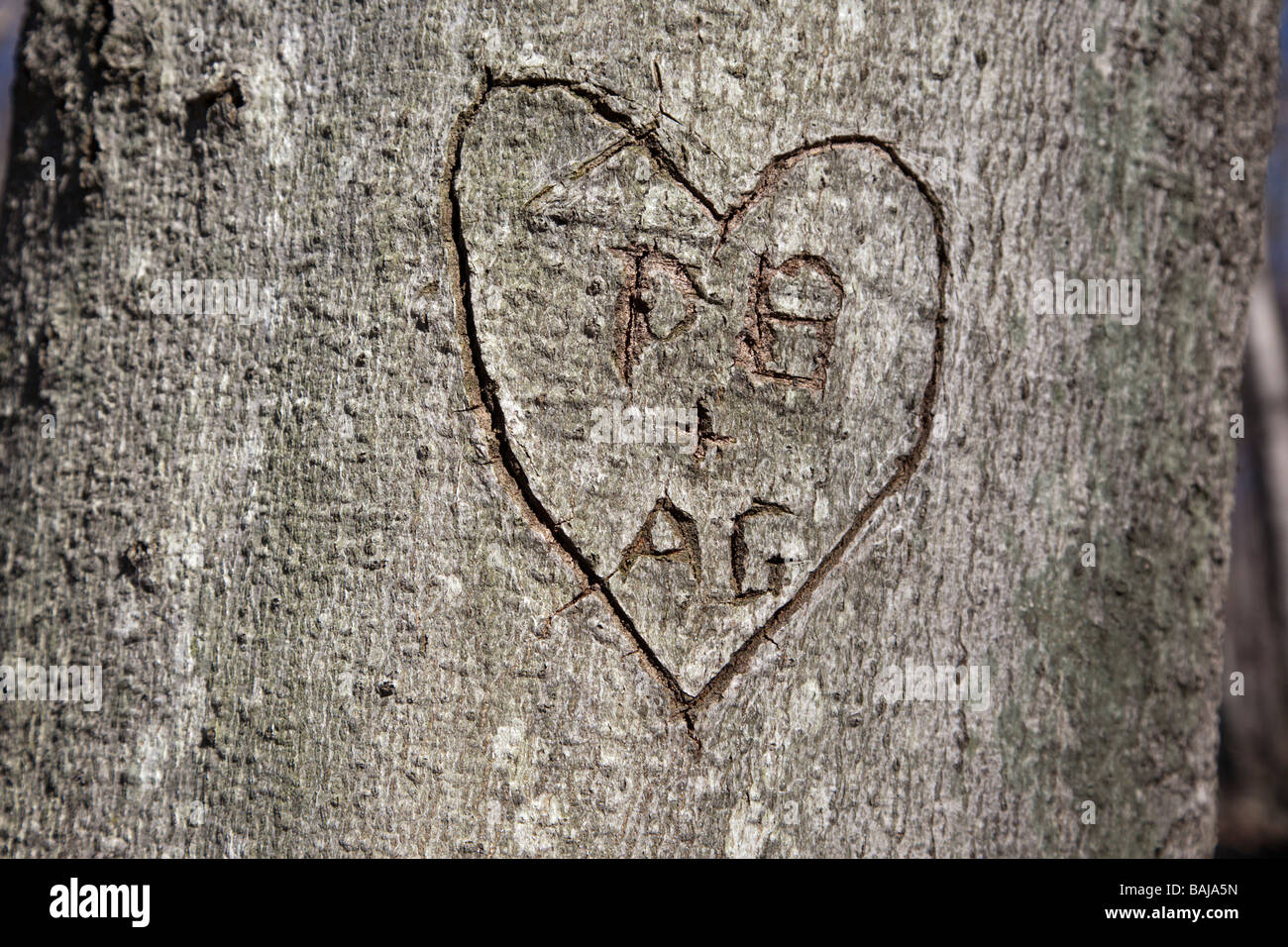 Initials Carved On Tree Stock Photos Initials Carved On Tree Stock