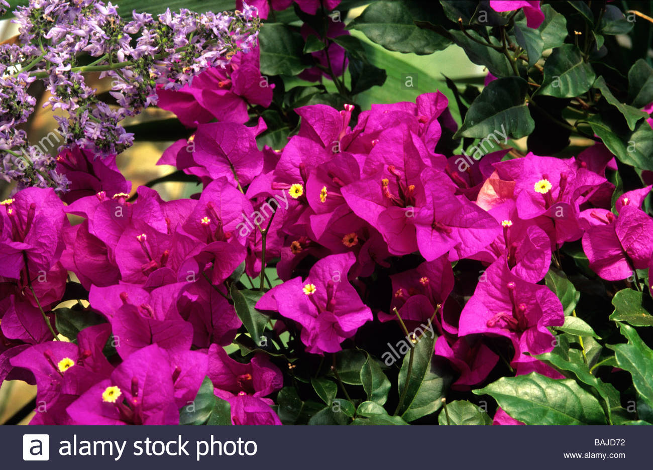 Purple Robe Stock Photos & Purple Robe Stock Images - Alamy