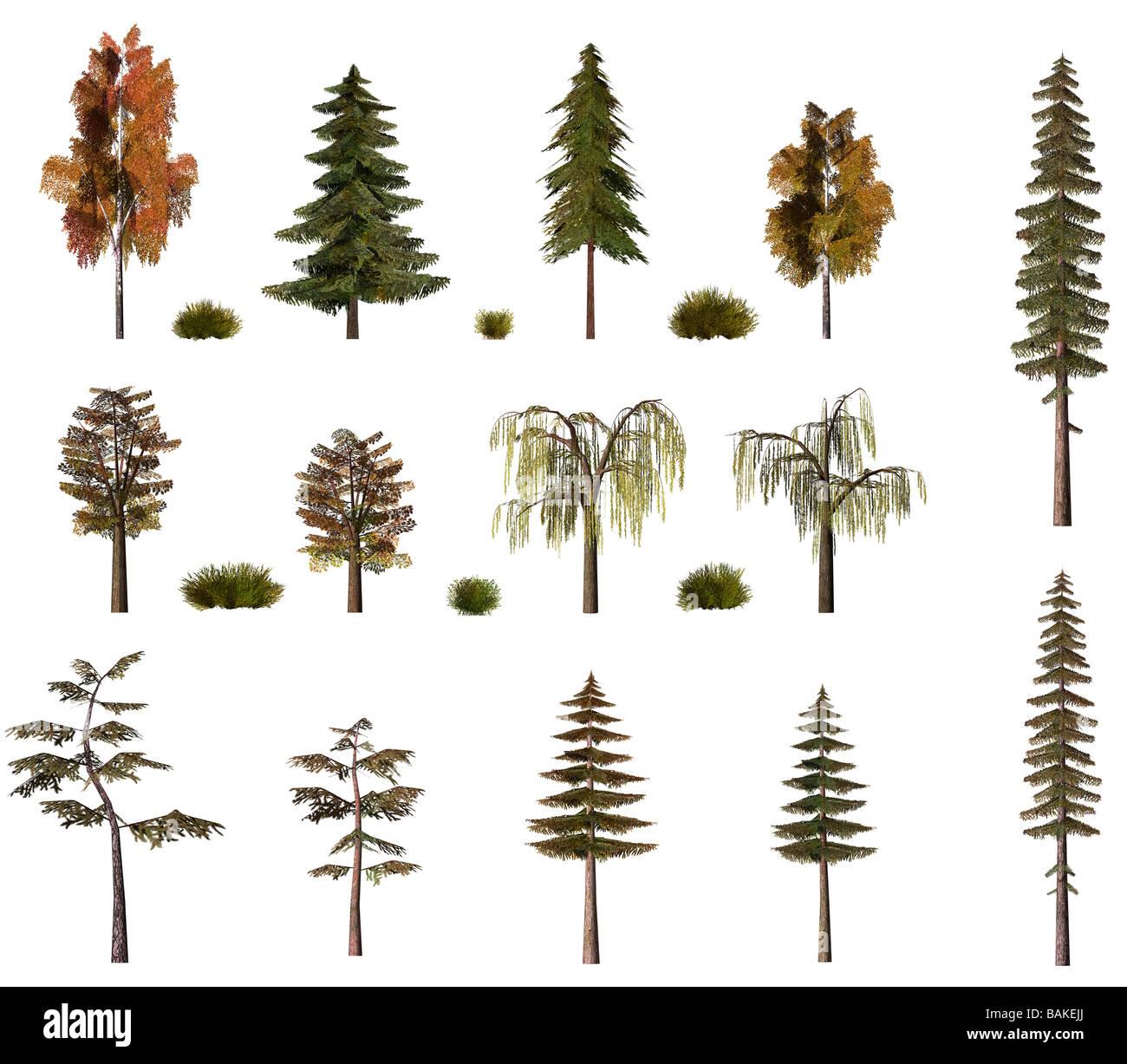 Fall Symbols Decoration Oak Tree Stock Photos Fall Symbols