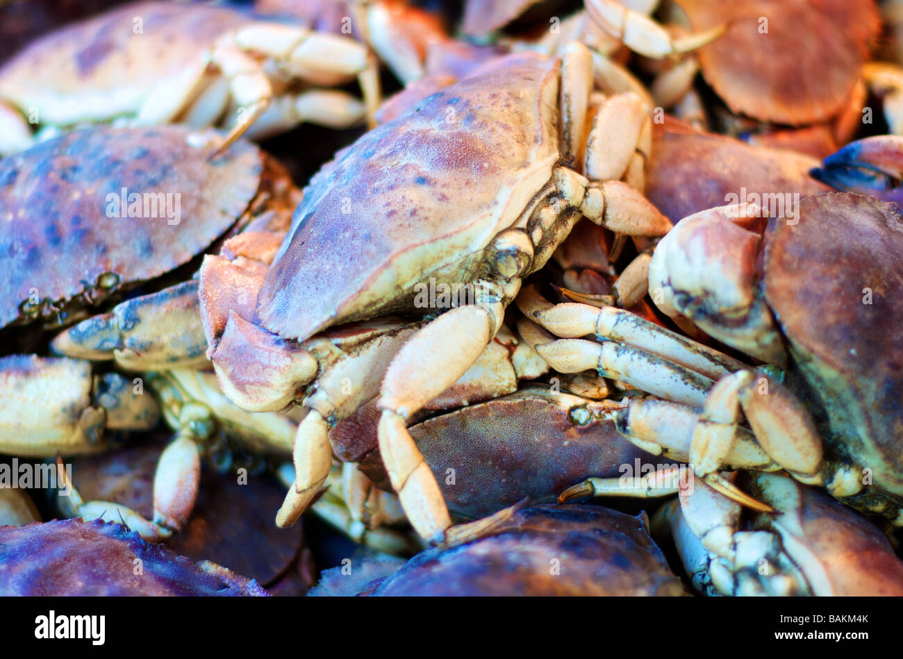 Colorful Close-up Photo of Live Crabs on Display at a Seafood Market - Stock Image
