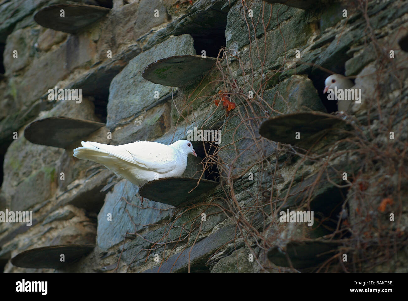 Birds sheltering in a brick wall - Stock Image