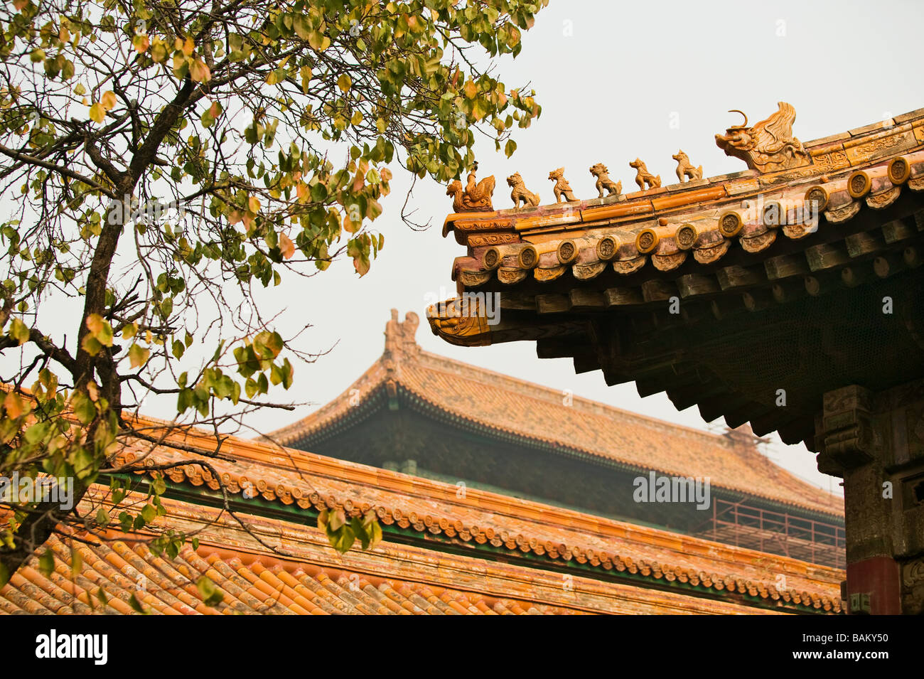Roofs in forbidden city beijing - Stock Image