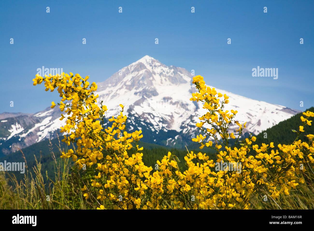 Lolo pass and mount hood - Stock Image