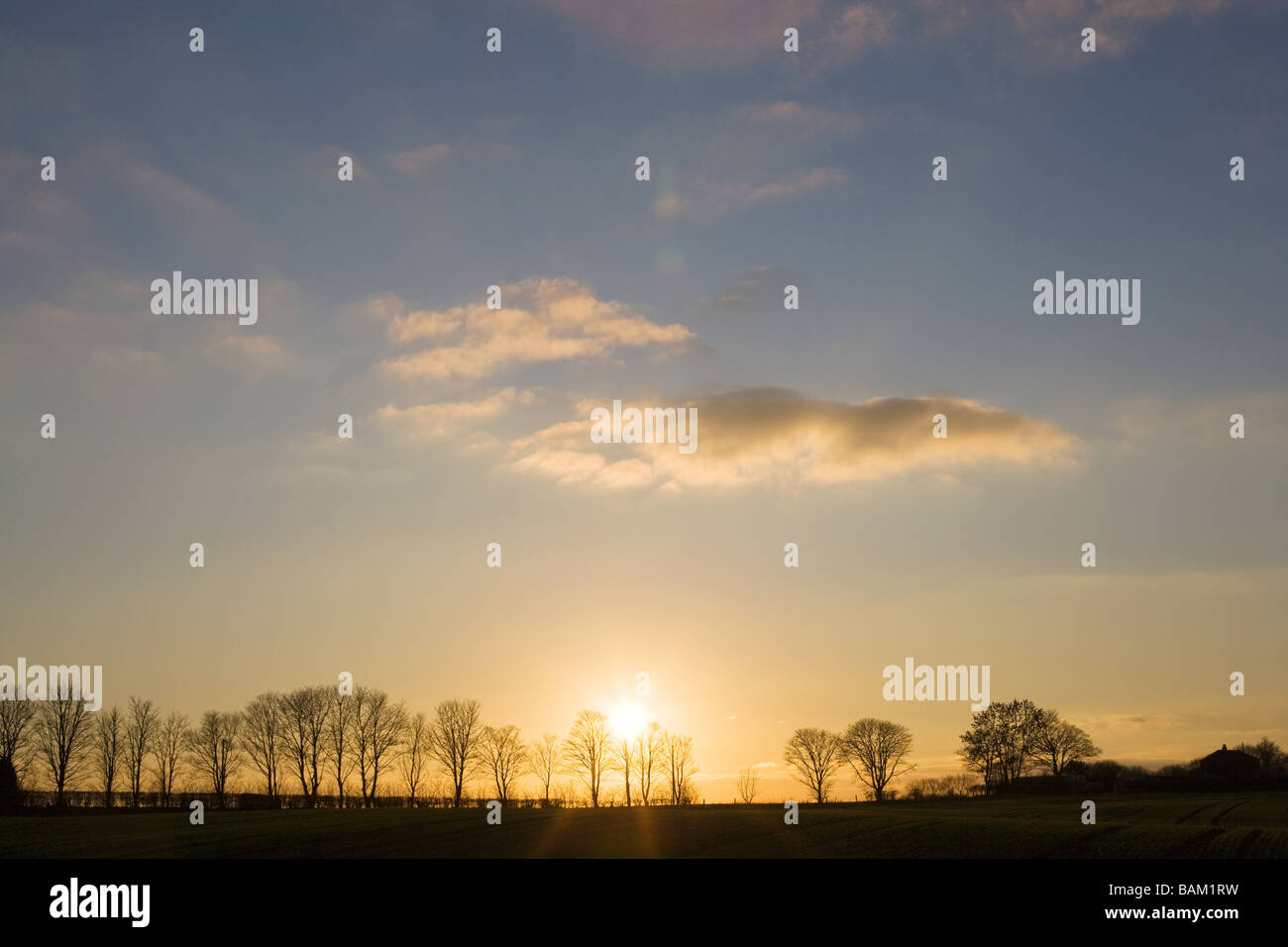 Silhouetted trees - Stock Image