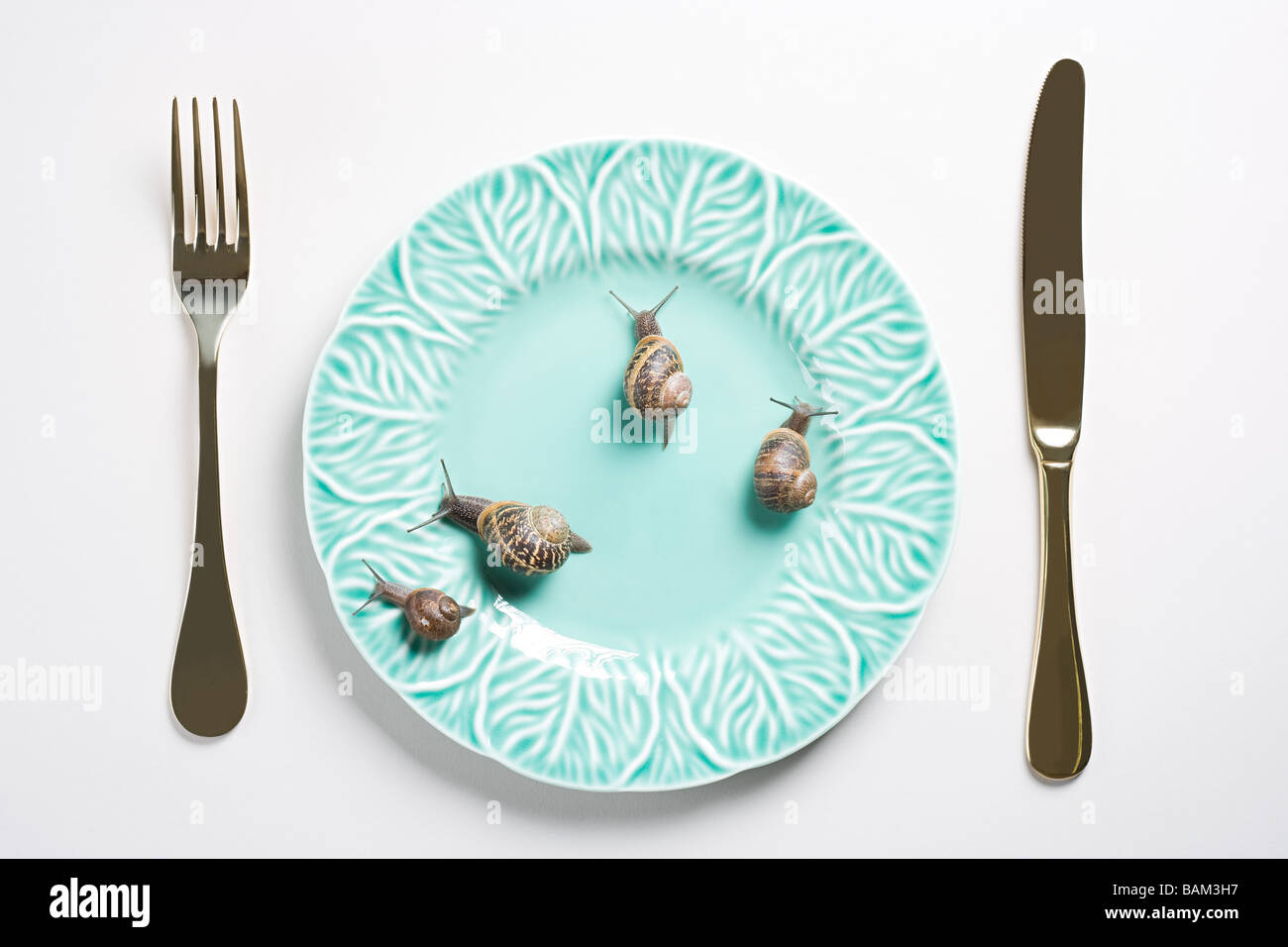 Four snails on a plate - Stock Image