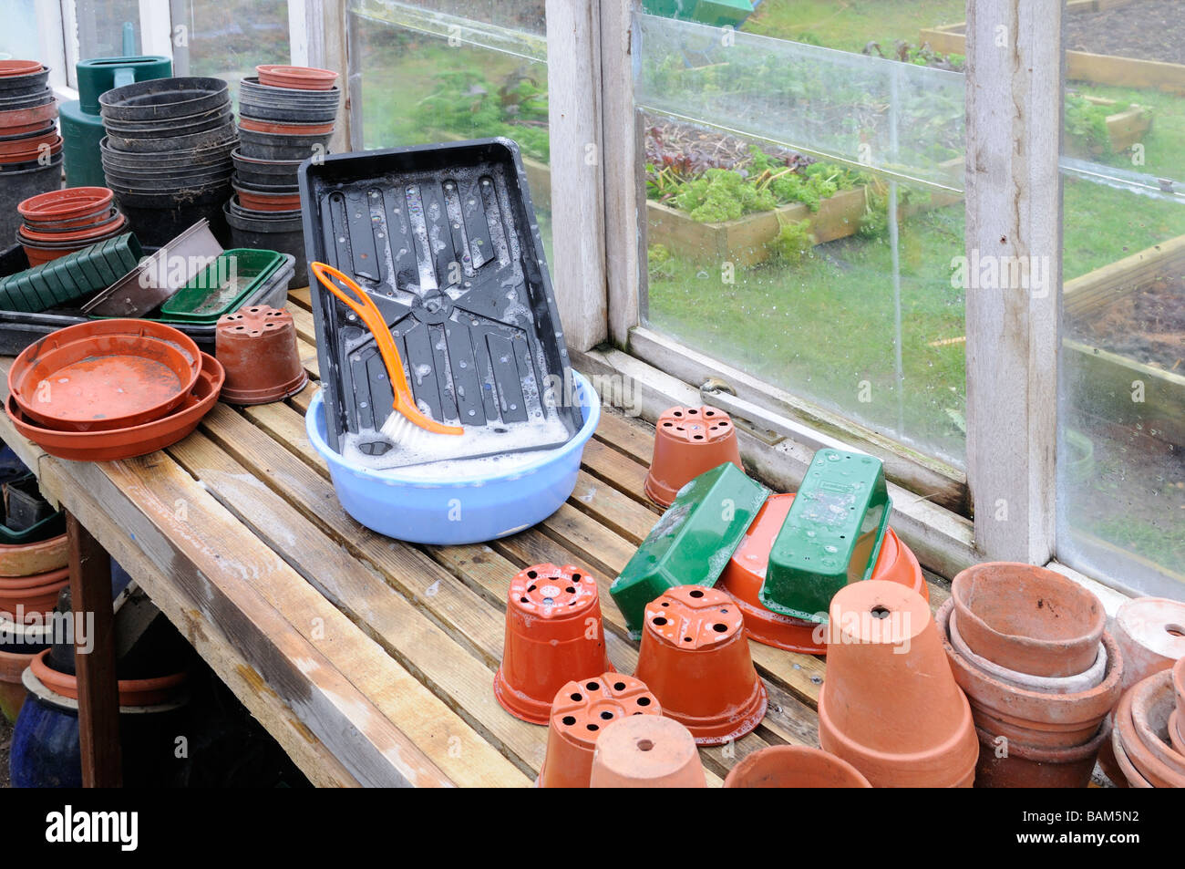 Pot washing scene with plastic flower pots trays on the greenhouse staging in late winter - Stock Image