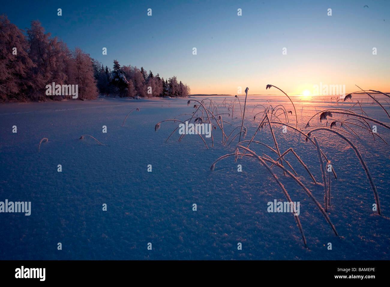Finland, Lapland Province, Kuusamo, Ruka Jarvi, sunrise over the Taiga - Stock Image
