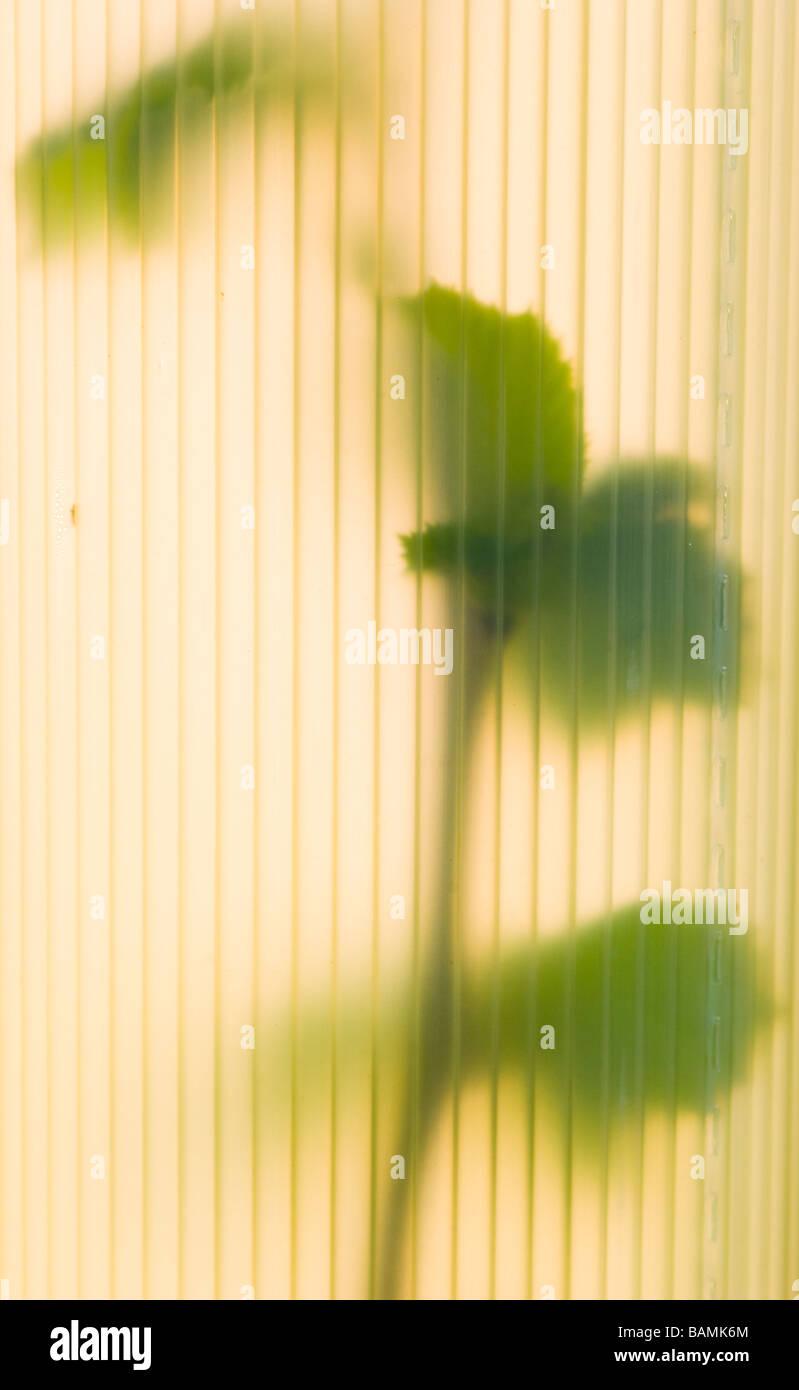 England Northumberland Slaley Hazel Saplings In Tree Guards Stock