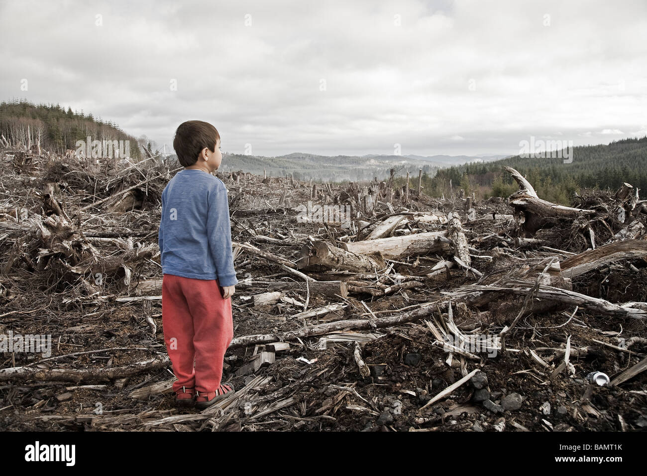 Young boy looking out at cleared landscape of fallen trees - Stock Image