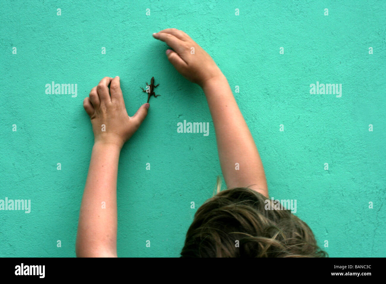 young boy trying to catch a gecko crawling on a wall, tropical island, Nassau, Bahamas - Stock Image