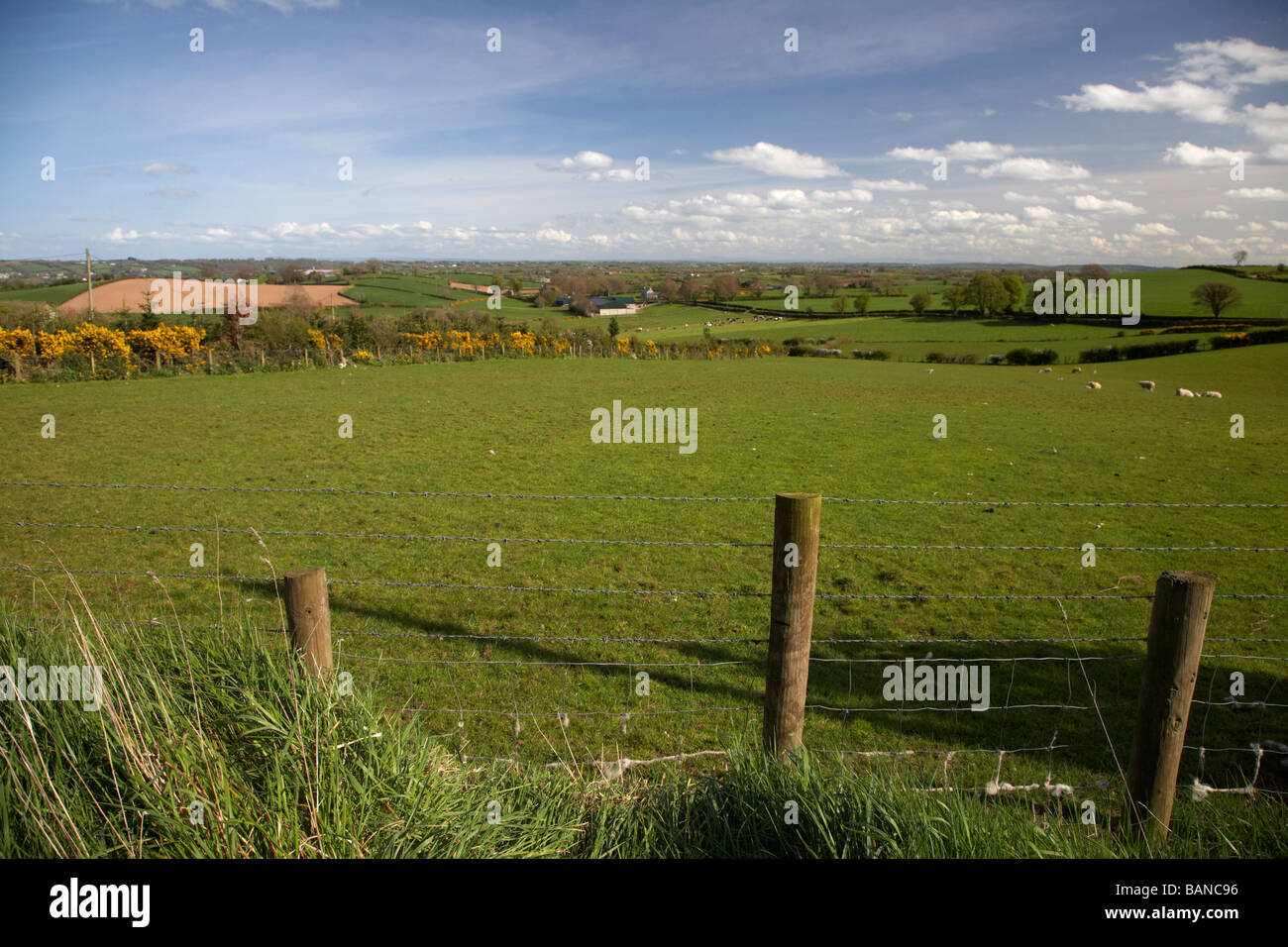 barbed wire fence in the rural countryside of county tyrone northern ireland uk - Stock Image