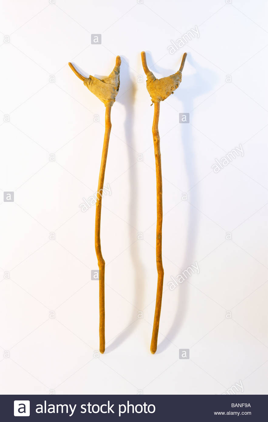 Prehistoric crutches Anasazi artifact Mesa Verde National Park Colorado - Stock Image