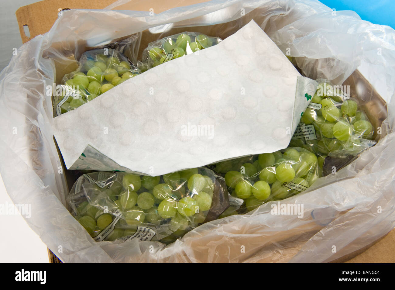 quality seedless table grape packed pack guard paper sheet active ingredient sodium meta bisulfite against funghi - Stock Image