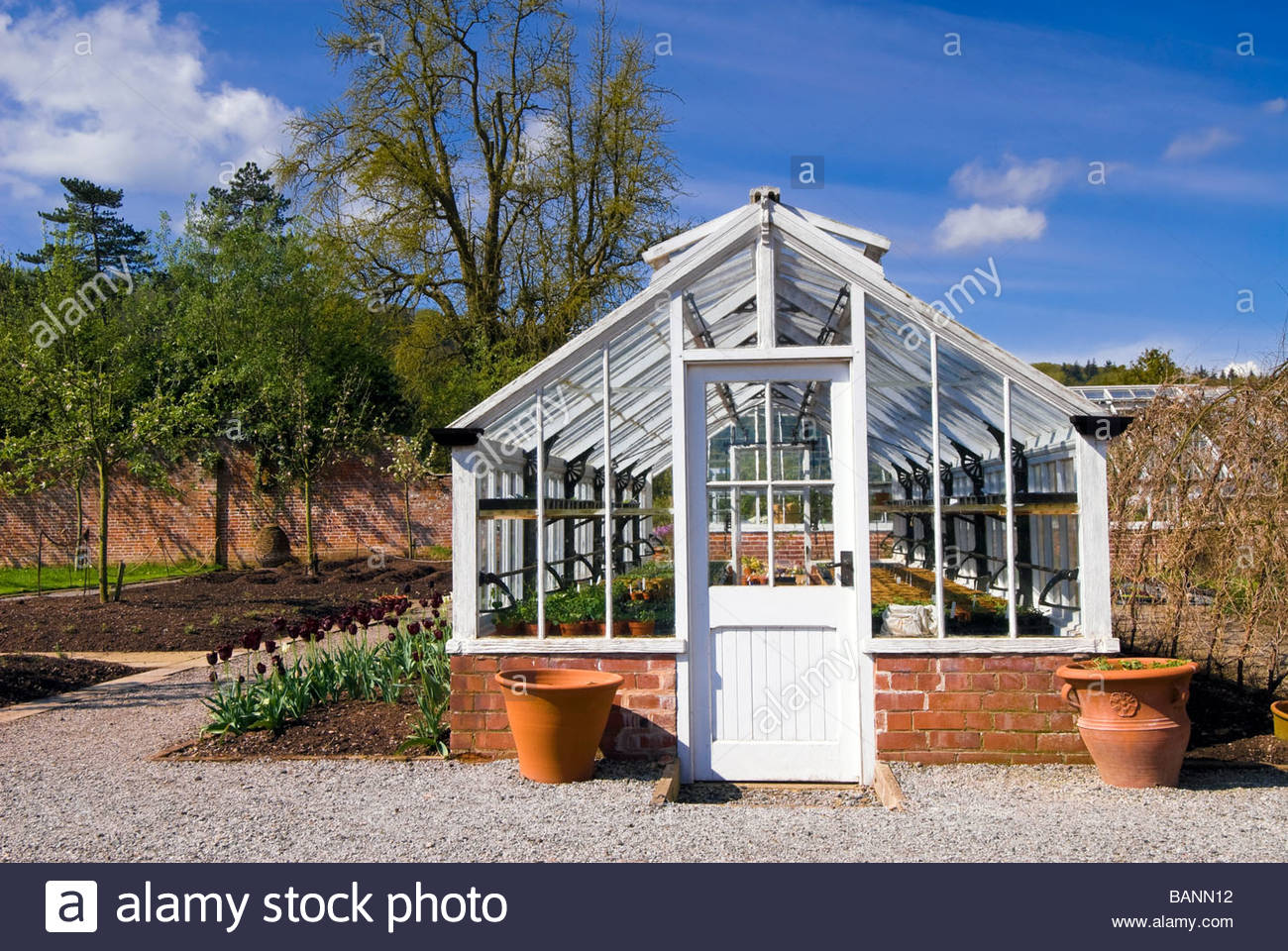 Wooden greenhouse in a walled garden, UK. Traditional green house viewed from the end with a door. - Stock Image