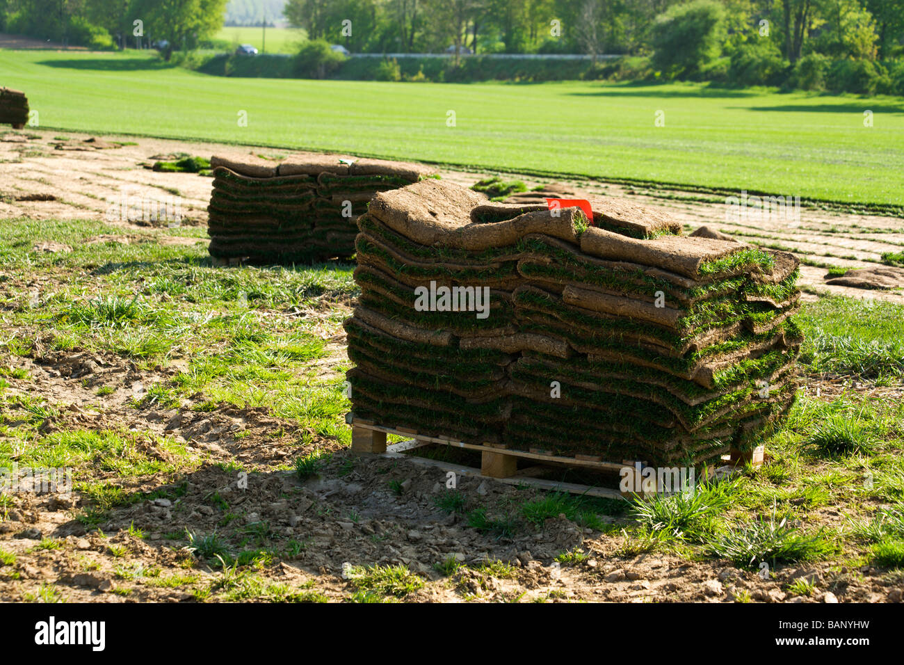 readymade lawn, folded sods on pallet - Stock Image