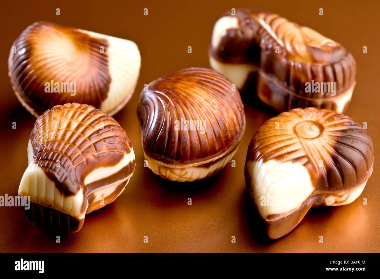 Belgian chocolate seashells - Stock Image