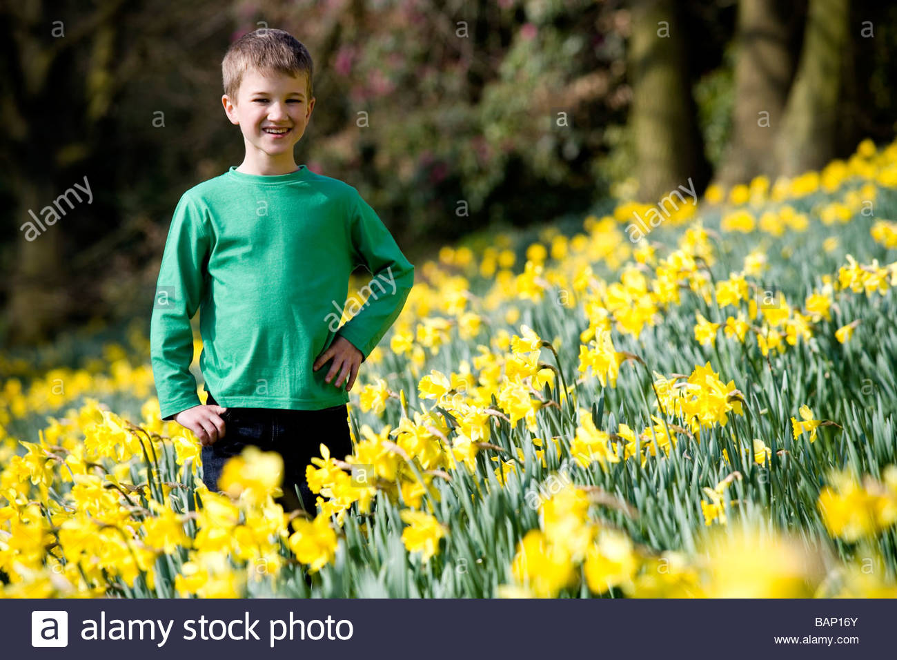 A young boy standing in a field of daffodils, smiling - Stock Image