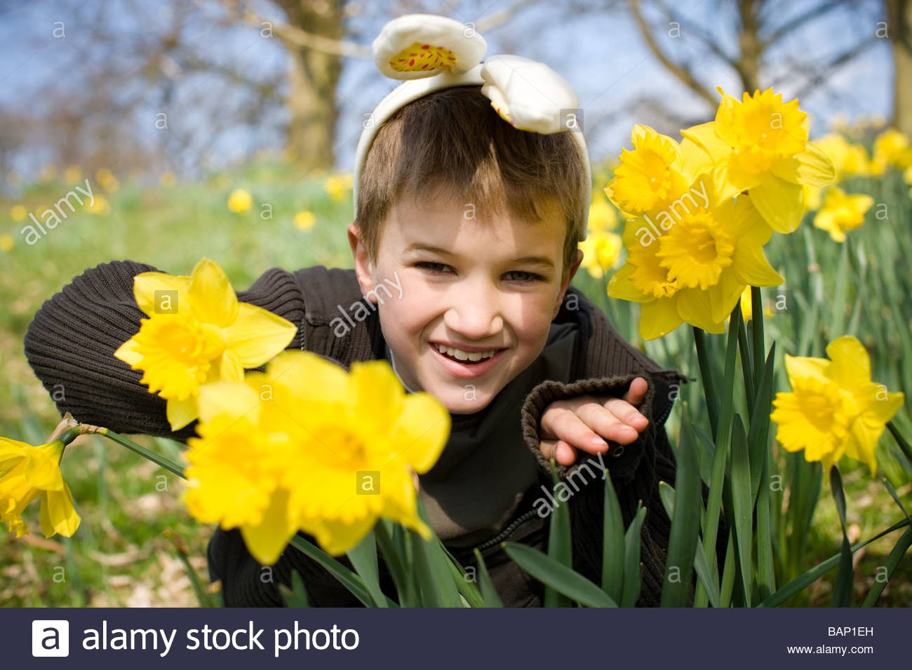 A young boy peering through daffodils wearing bunny ears - Stock Image