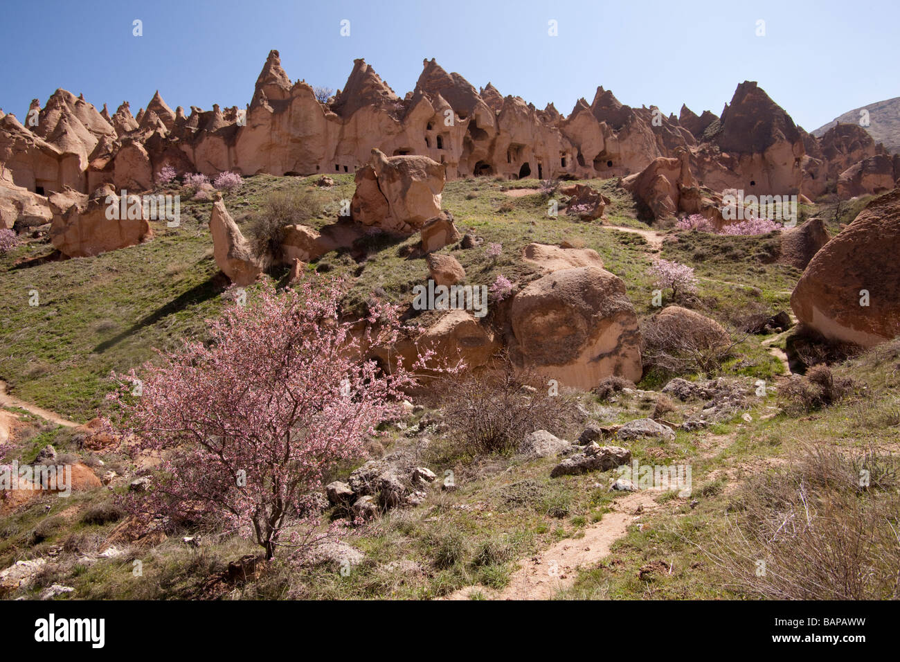 Fairy chimneys and dwellings in Cappadocia Turkey - Stock Image