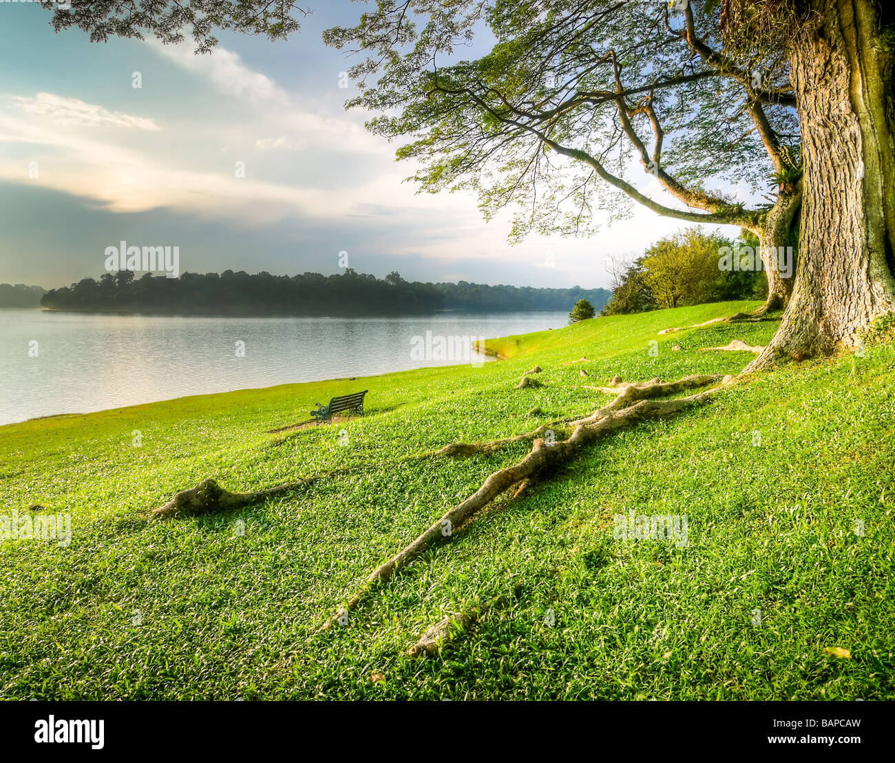 Under a Large Tree on the Lake Shore - Stock Image