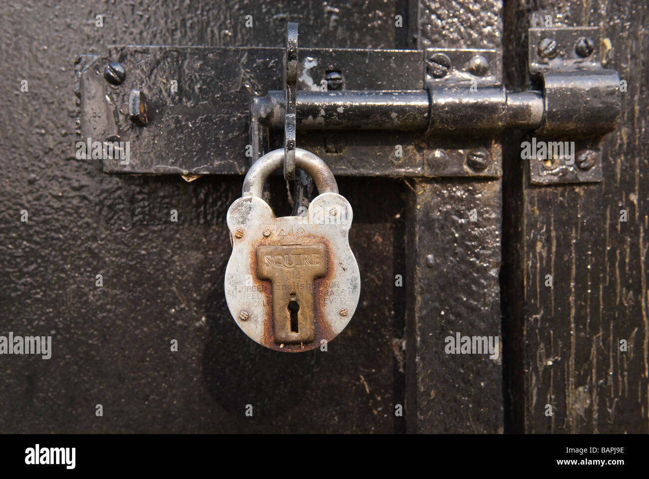 A Squire forged steel shackle padlock locked on a bolt on a garden shed door - Stock Image