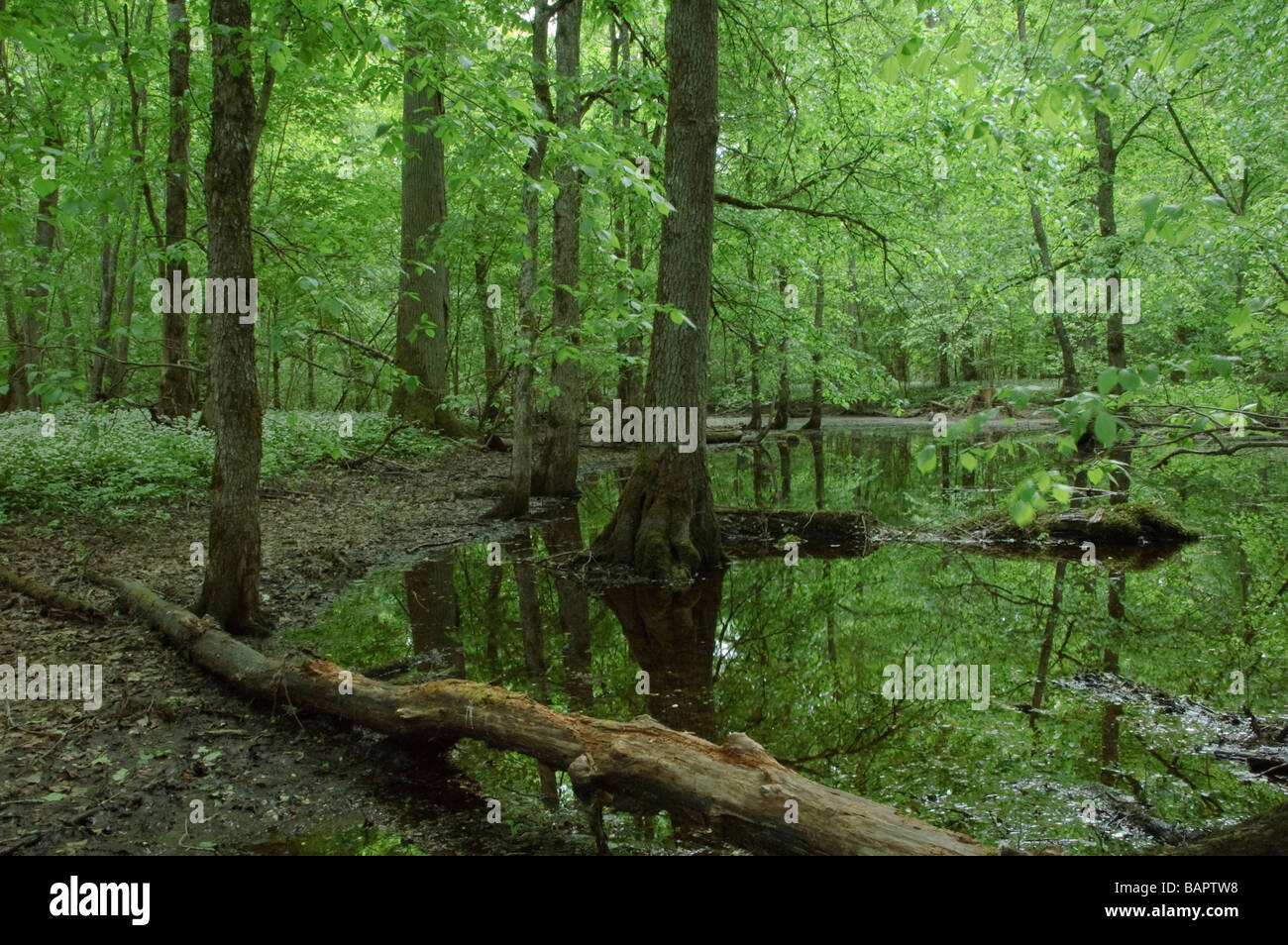 Habitat od European concern: Riparian mixed forest Stock Photo
