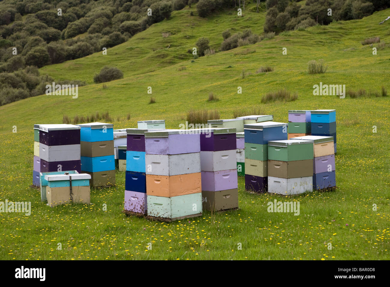 Beehives in New Zealand Stock Photo: 23862196 - Alamy