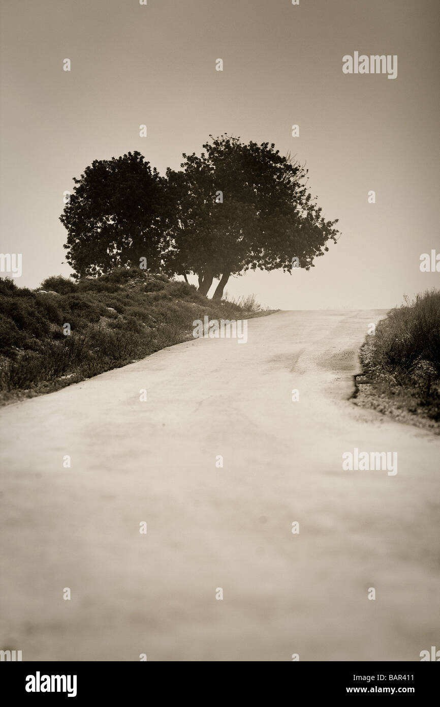 Foggy road leads toward leaning trees - Stock Image