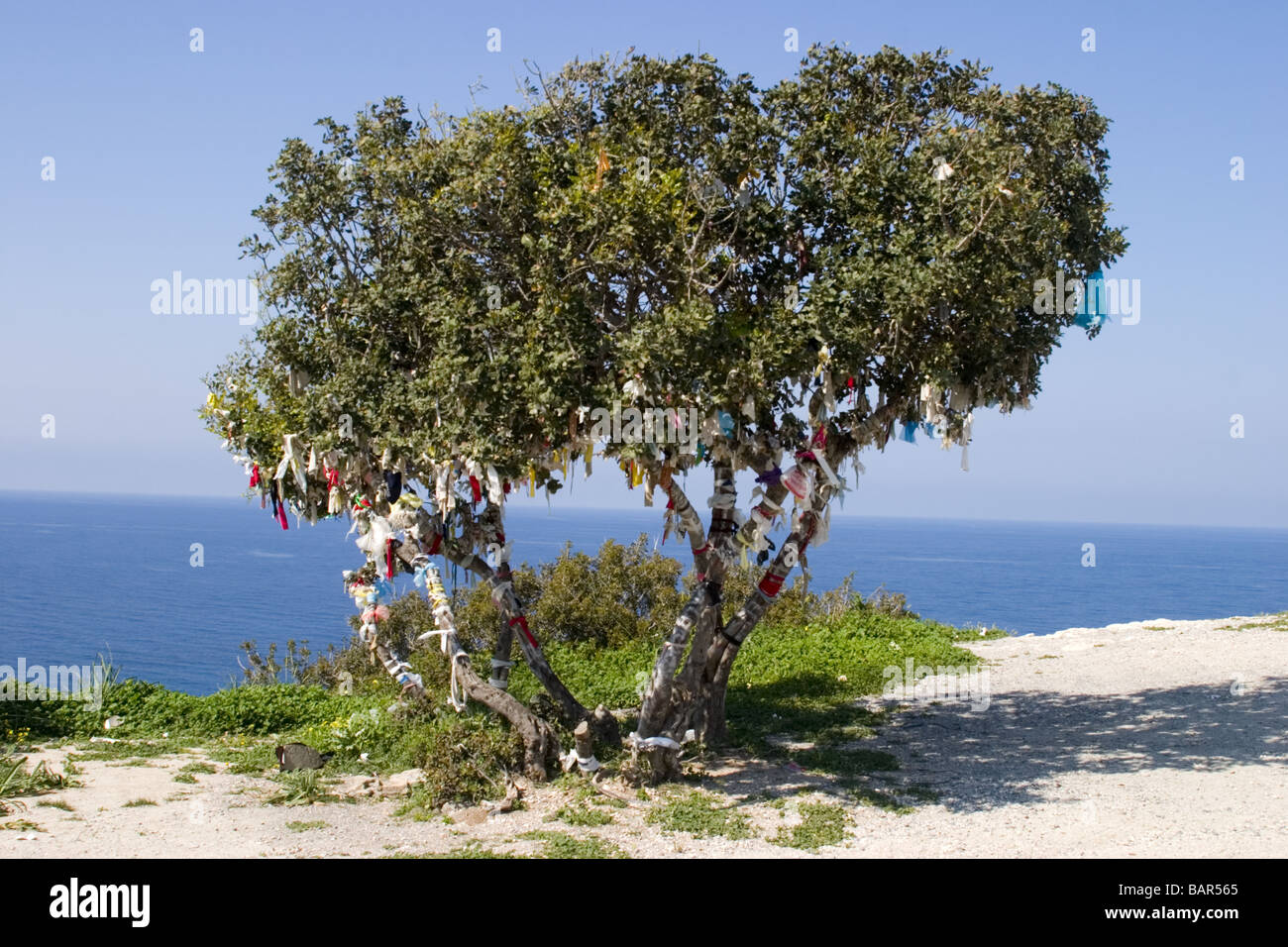 Rags tied to memory tree North Cyprus coast - Stock Image
