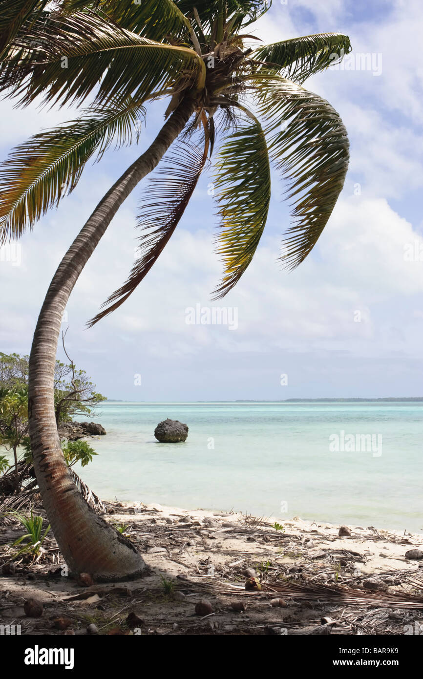 A palm tree casts a soft shadow on fallen coconuts at the shore of a desert island. Fanning Island, Republic of - Stock Image