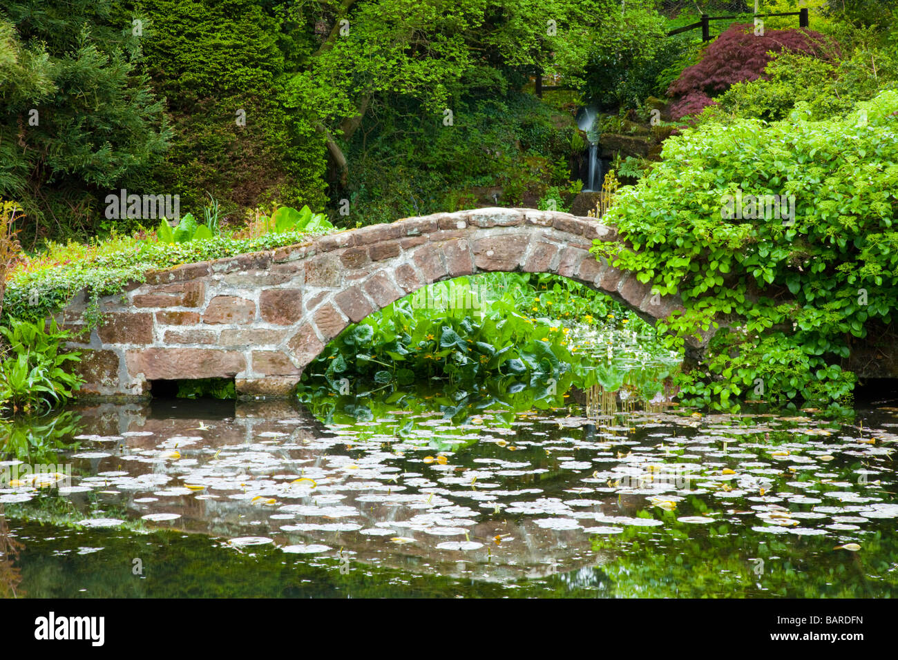 A stone garden bridge over a lily pond with japanese acer trees at Ness Botanical Gardens in Ness, Cheshire - Stock Image
