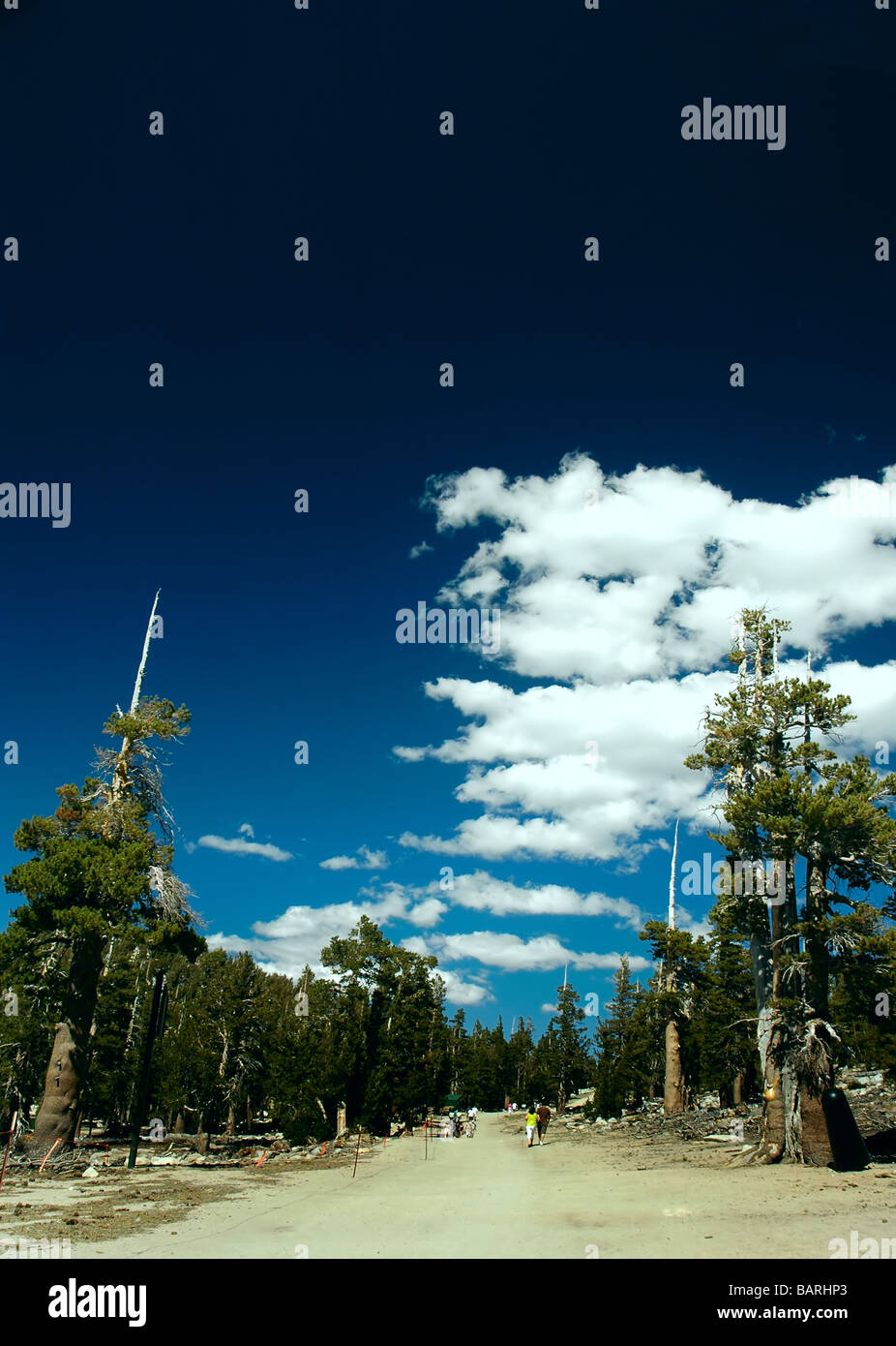 Large hiking trail in the mountains with hikers Stock Photo