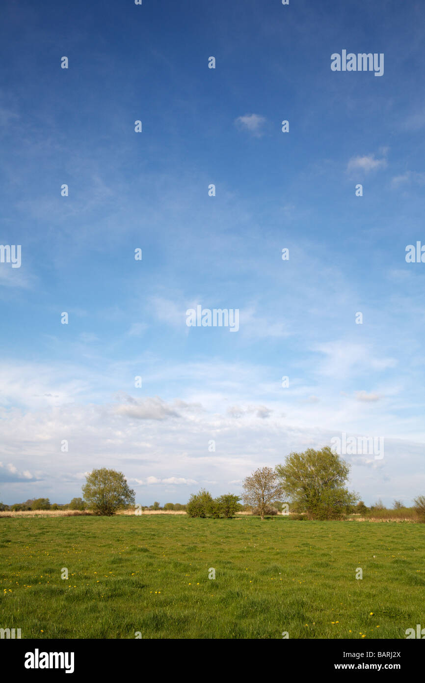 View across the Somerset Levels of low lying pasture. - Stock Image