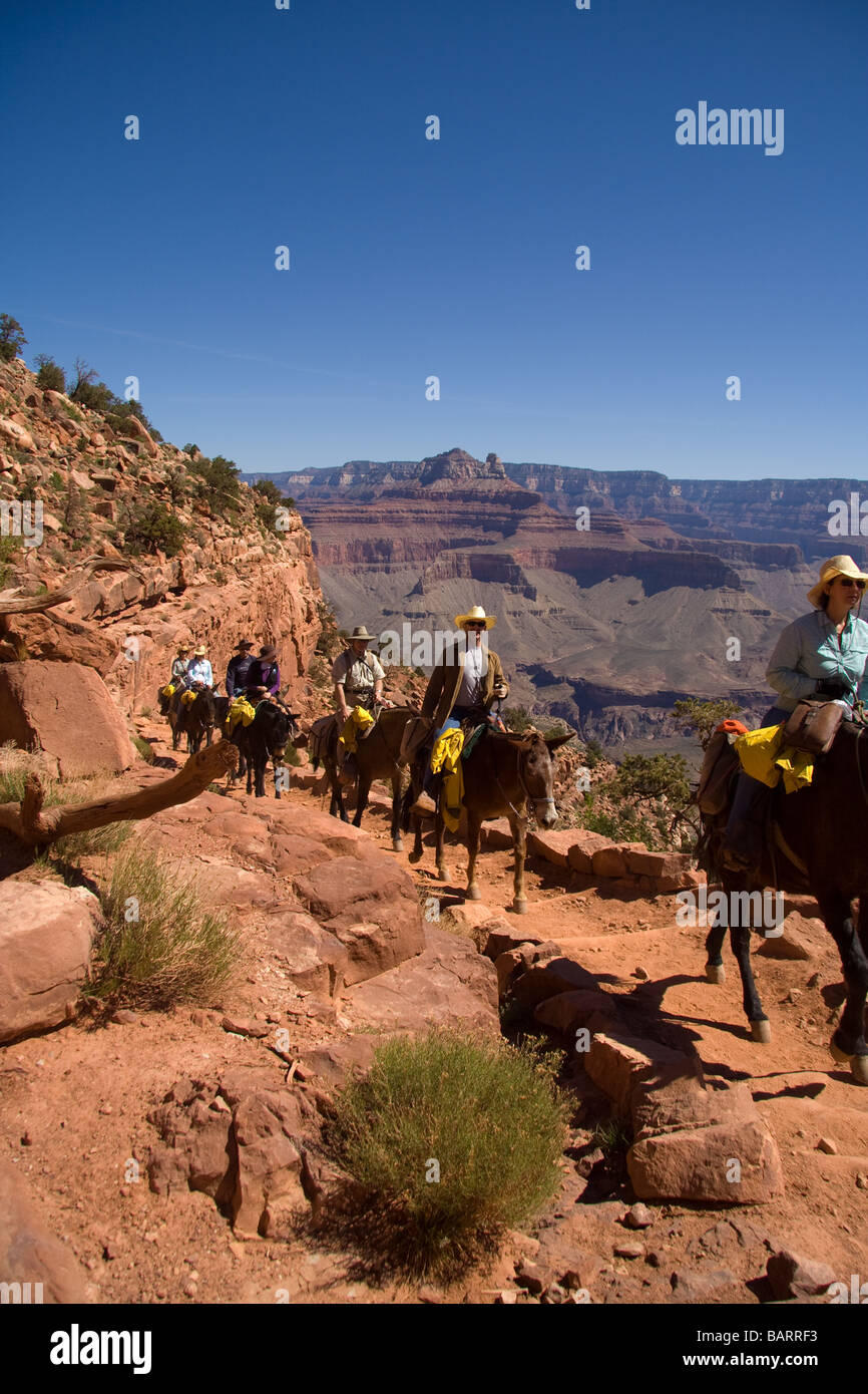 Mule riders in the grand Canyon - Stock Image