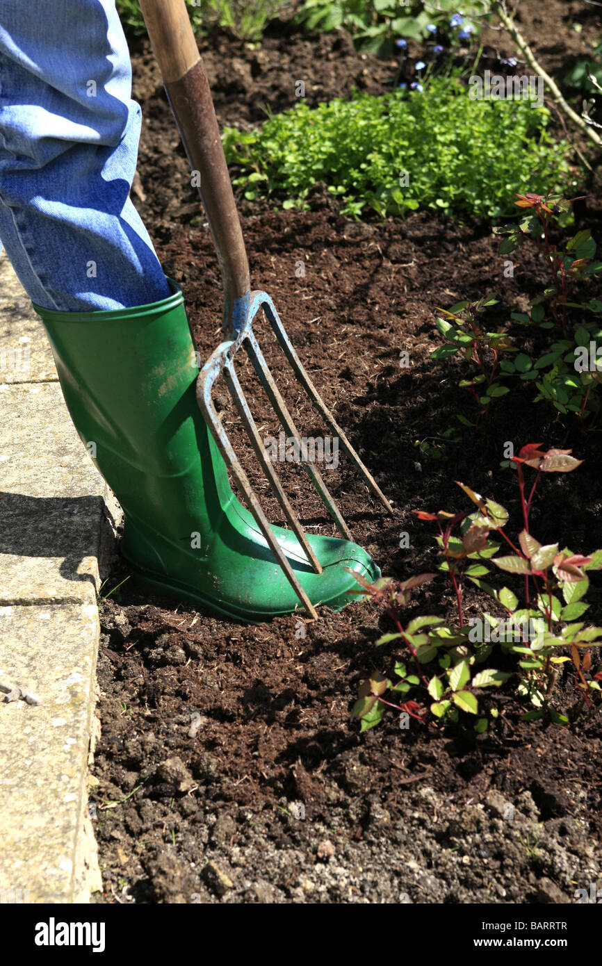 A man gardening accidently puts a garden fork through his foot - Stock Image