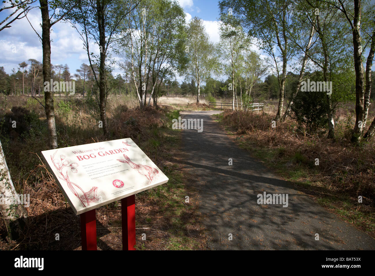 the bog garden peatland education area at Peatlands country Park county tyrone northern ireland uk - Stock Image