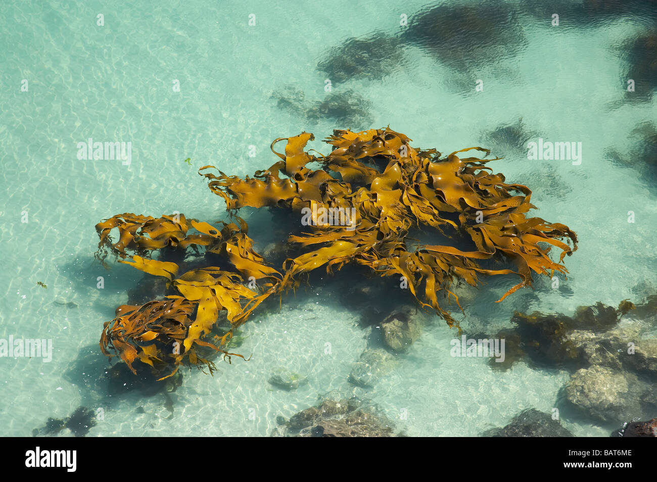 Kelp and Clear Water Viewed from Mapoutahi Historic Maori Pa Site north of Dunedin South Island New Zealand Stock Photo