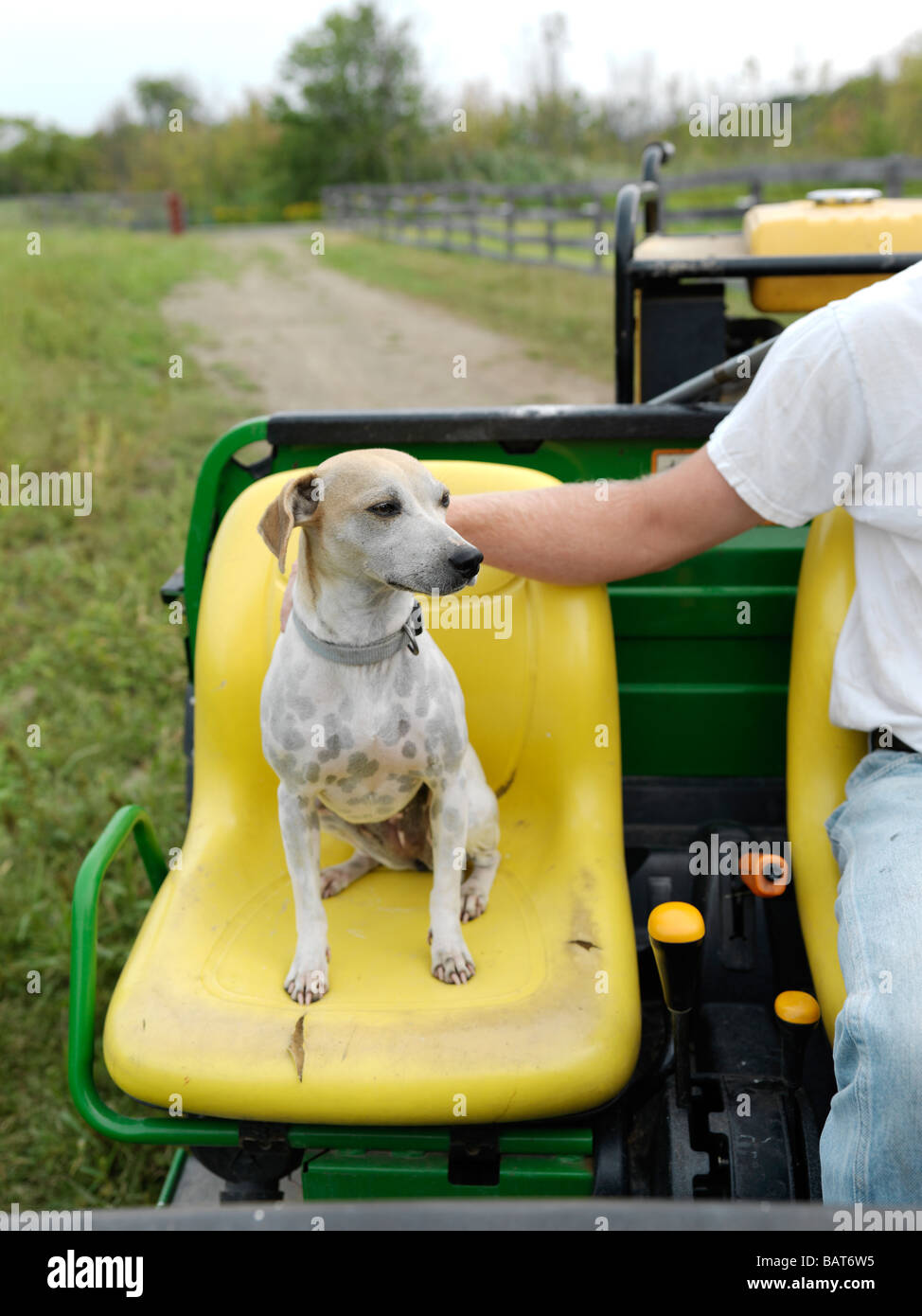 A loyal dog sits in the seat next to his owner on a tractor at a farm in Upstate New York. - Stock Image