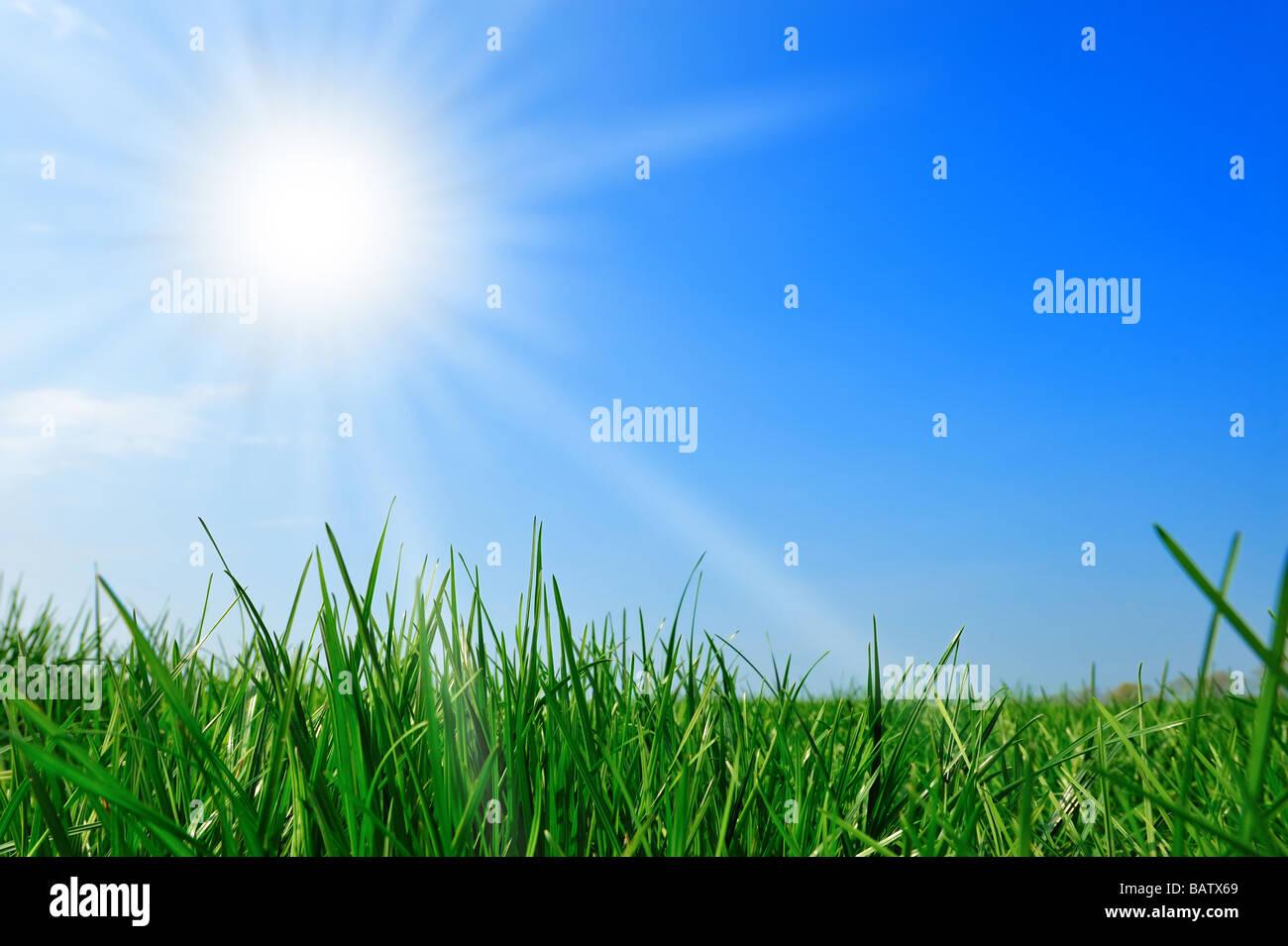 fresh green grass summer background - Stock Image