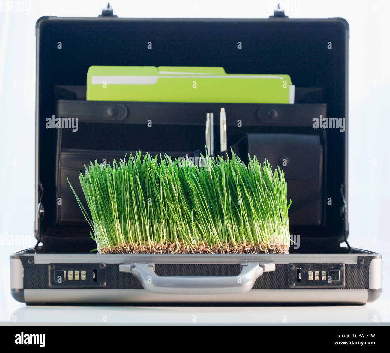 Grass growing in briefcase - Stock Image