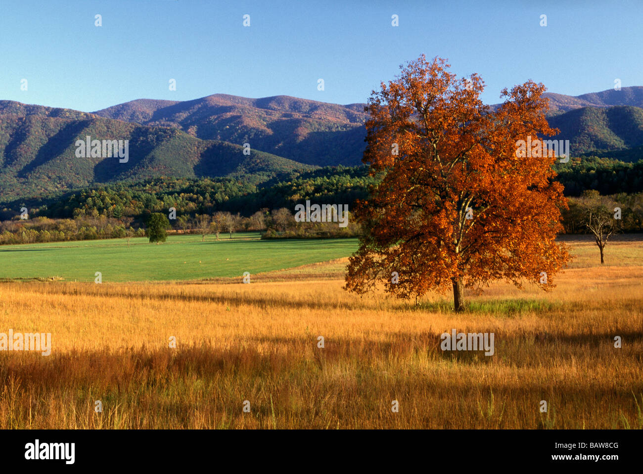 Fall Colors in Cades Cove - Smoky Mountain National Park - Stock Image