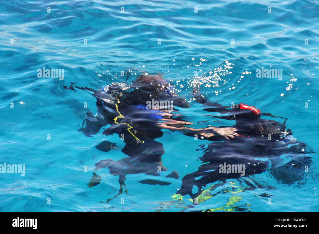 scuber diver submerging underwater in the red sea sharm el sheikh - Stock Image