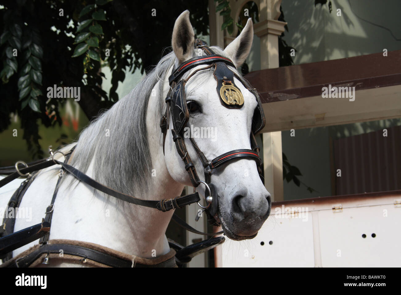 White Horse In Parade Gear Stock Photo Alamy