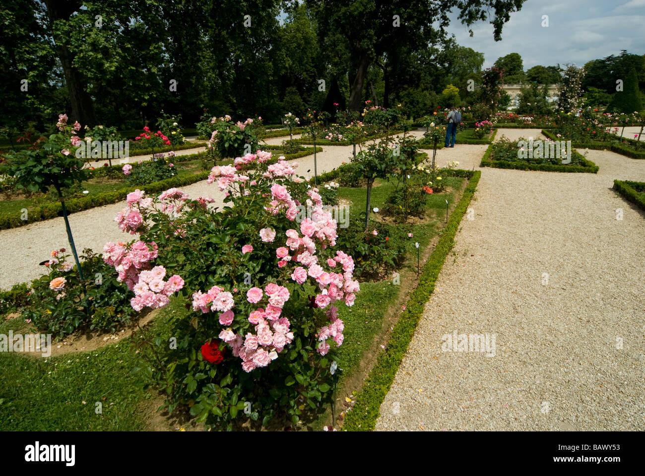 France, Paris, Bois de Boulogne, Parc de Bagatelle, rose garden and orangery - Stock Image
