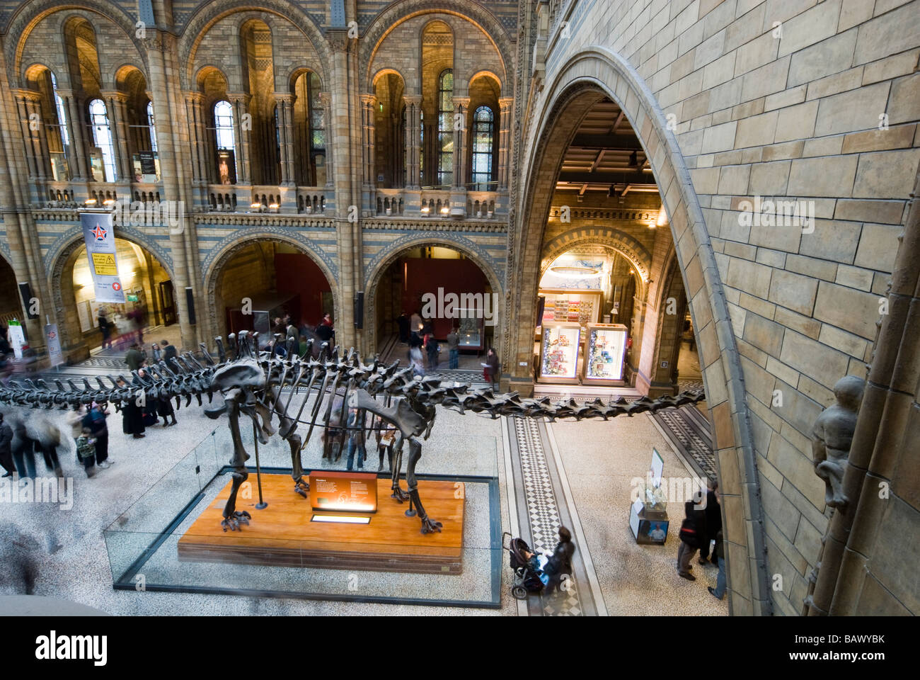 natural history museum london interior - Stock Image