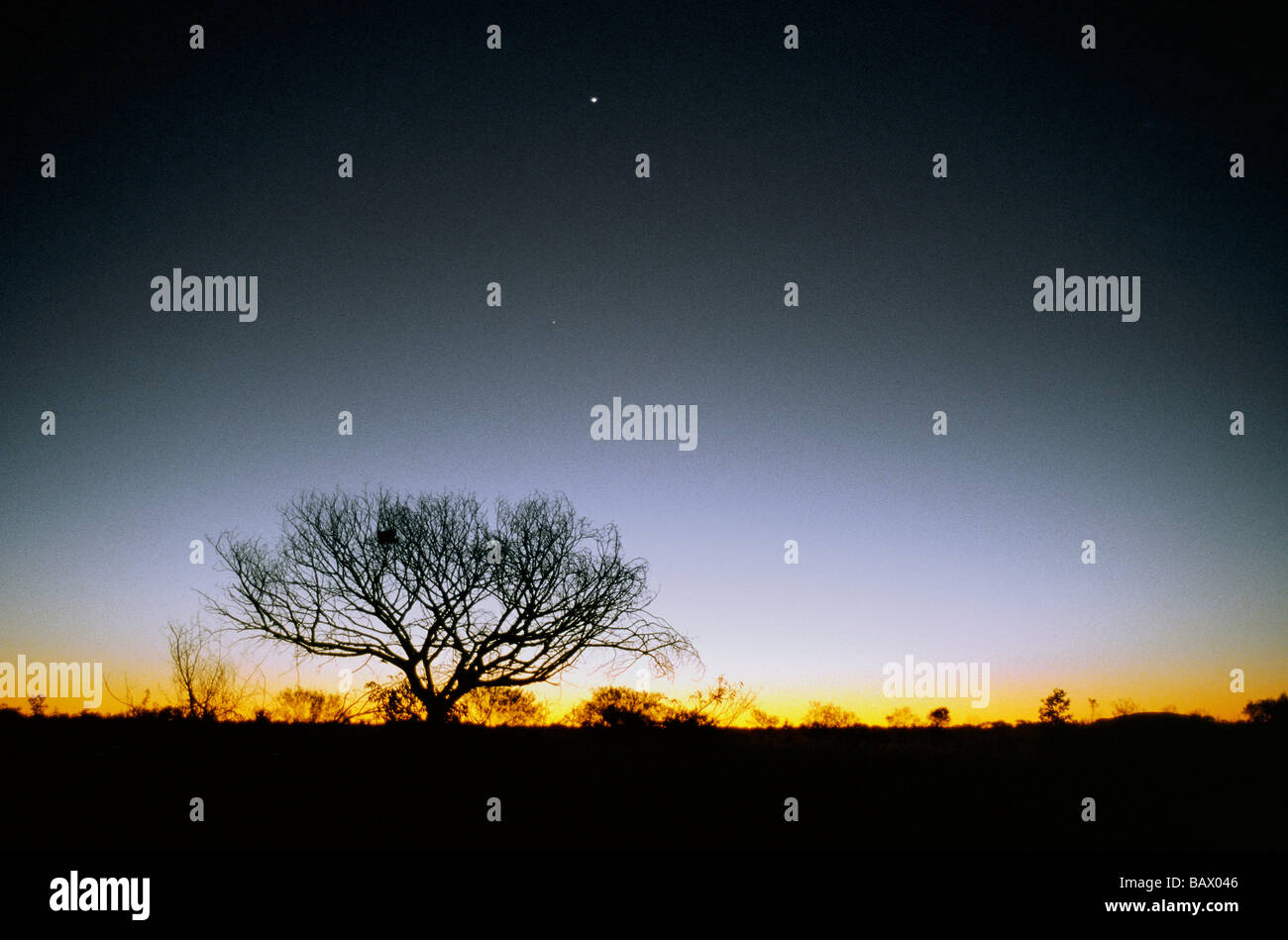 Tree silhouetted in evening glow - Stock Image
