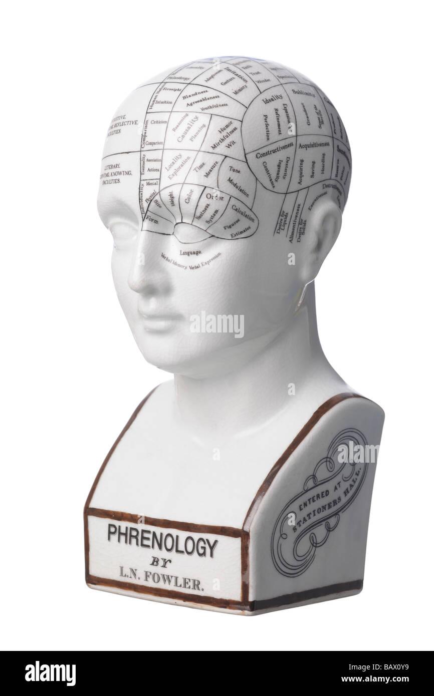 Phrenology ceramic bust head - Stock Image